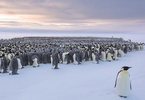 پنگوئن ها ,اخبارگوناگون,خبرهای گوناگون