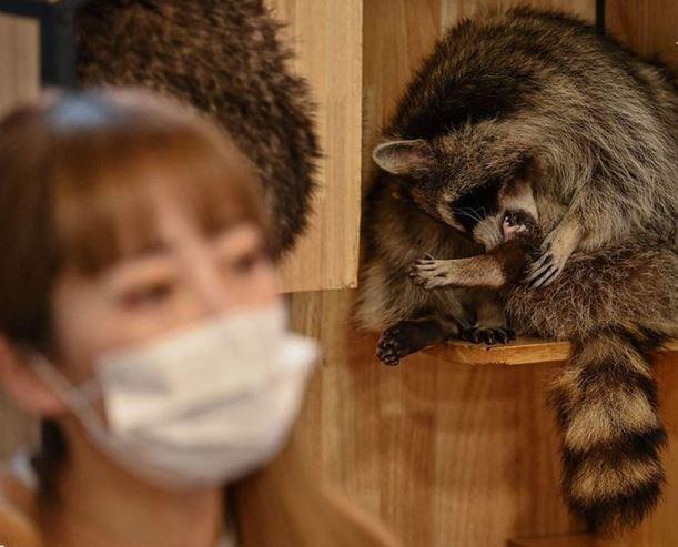 حیوانات وحشی,اخبارگوناگون,خبرهای گوناگون