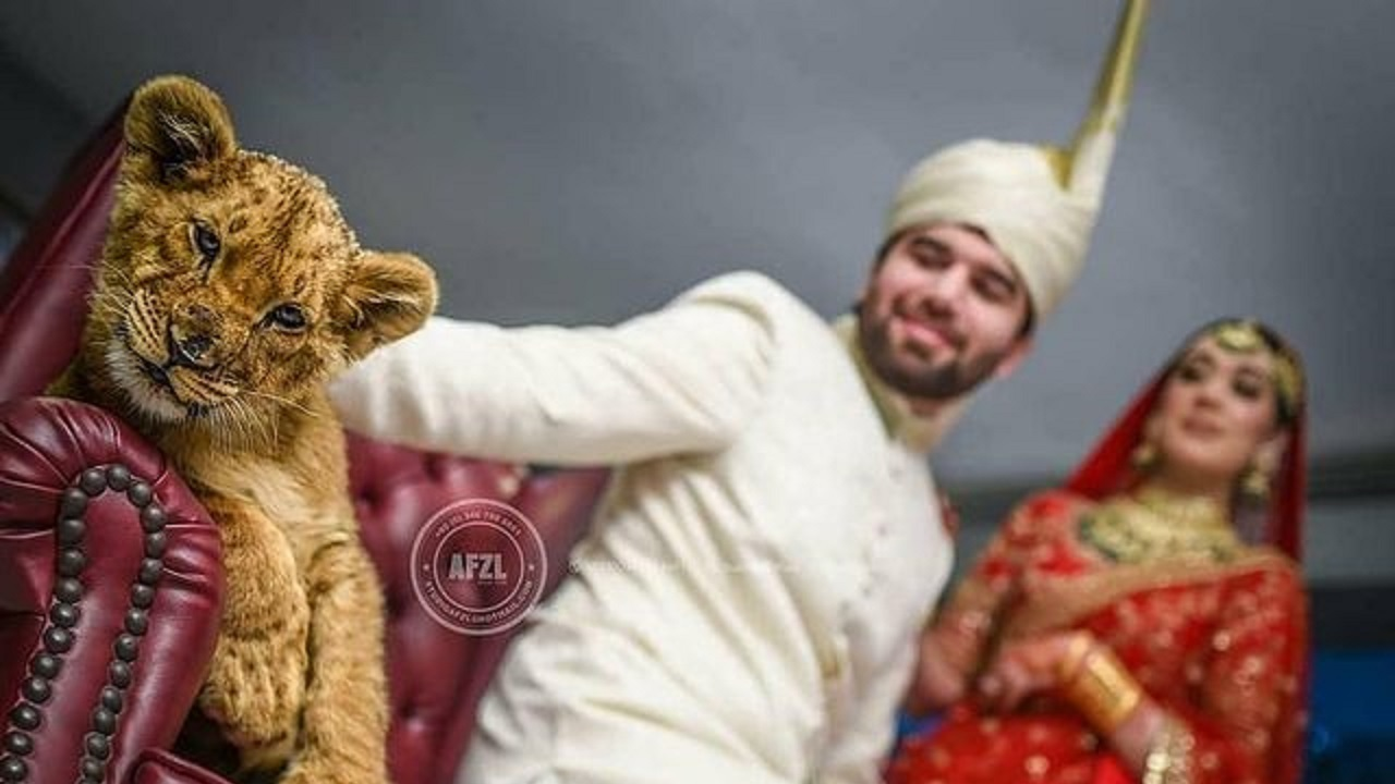 زوج پاکستانی,اخبارگوناگون,خبرهای گوناگون