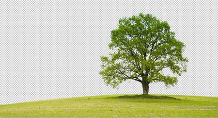 نحوه برش عکس در فتوشاپ, دانلود برش عکس در فتوشاپ