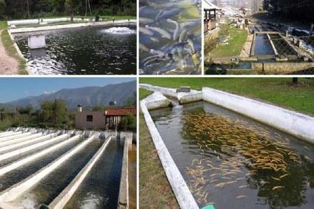 آموزش پرورش ماهی قزل آلا,طرح پرورش ماهی قزل آلا,استخر پرورش ماهی قزل آلا