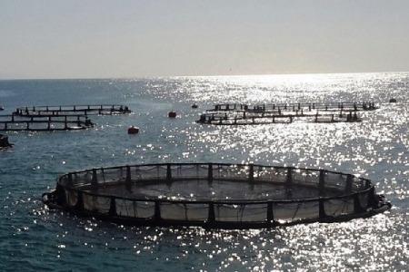 ماهی قزل آلا،پرورش ماهی قزل آلا,پرورش ماهی قزل آلا در قفس