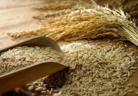 فصل کاشت برنج,نحوه کاشت برنج,فصل کاشت وبرداشت محصول برنج