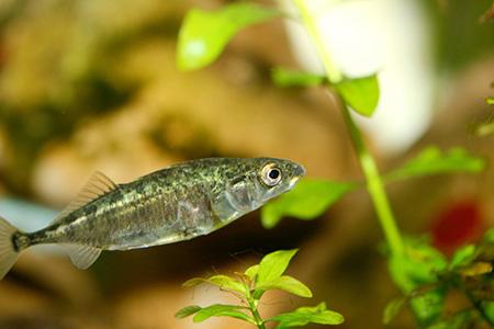 خصوصیات ماهی ها, ویژگی های گروه ماهی ها