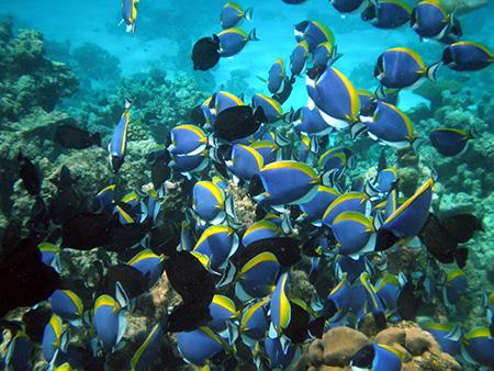 معرفی گروه ماهیان,آشنایی با ماهی ها