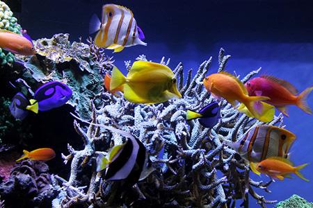 ویژگی اساسی ماهی ها, خصوصیت ماهی ها