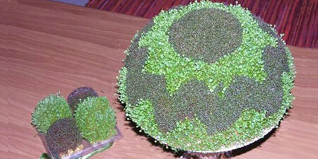 کاشت سبزه ی توپی,آموزش کاشت سبزه ی توپی