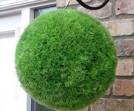 کاشت سبزه های مدل دار عید, راهنمای کاشت سبزه توپی