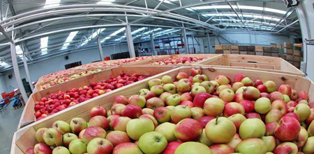 روش نگهداری سیب برای مدت طولانی,نگهداری سیب