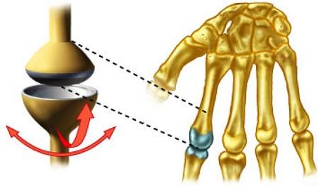 عکس مفاصل بدن,مفصل زانو,مفصل لقمه ای