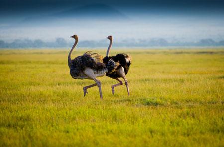 روغن شتر مرغ,فواید روغن شتر مرغ برای پوست,چرا روغن شترمرغ برای پوست مفید است