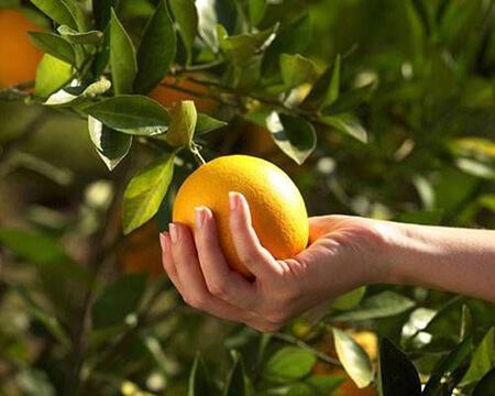 روش نگهداری از پرتقال,طرز نگهداری از پرتقال,راههای نگهداری از پرتقال