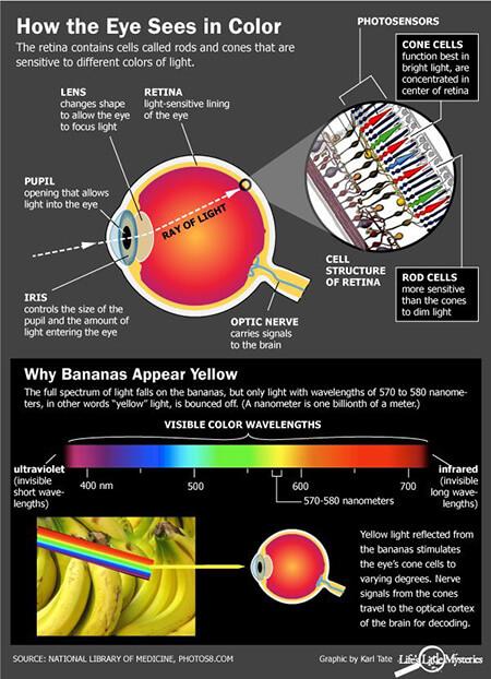 دلایل دیدن اجسام رنگی,چرا رنگ می بینیم