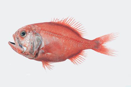 بیشترین عمر حیوانات,عمر ماهی لیزا به سر