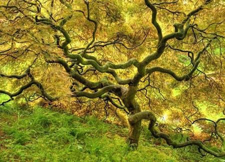 %name آیا می دانید نام درختان بهشتی چیست؟
