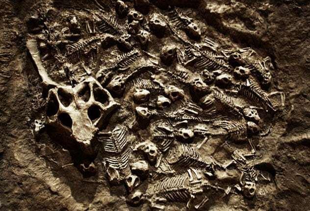 فسیلها,اخبارگوناگون,خبرهای گوناگون