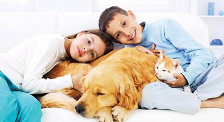 بهترین حیوان خانگی از نظر اسلام, بهترین حیوان خانگی, بهترین حیوان خانگی از نظر اسلام چیست