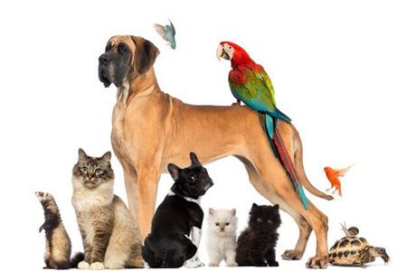 نگهداری حیوانات خانگی از نظر اسلام, نگهداری گربه از نظر اسلام, نگهداری حیوانات خانگی از نظر قرآن
