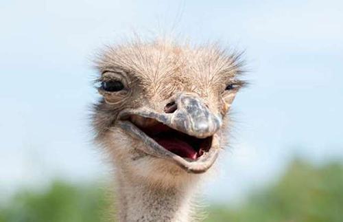 %name لبخند شیرین حیوانات به بهانه روز جهانی خنده