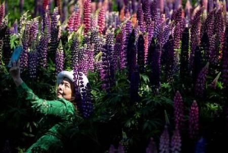 عکسهای جالب,عکسهای جذاب,بوستان گل