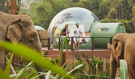 راه اندازی هتل جنگلی حبابی, عکس حباب های جنگلی, اقامتگاه حباب های جنگلی